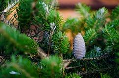 Fichten- und Tannenbaumast und Tannenbaum stockbild