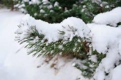 Fichtenzweig unter Schneeabschluß oben, Seitenansicht Lizenzfreies Stockfoto
