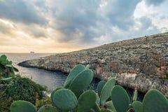 Fico d'India del fiore a Malta, Fotografie Stock Libere da Diritti