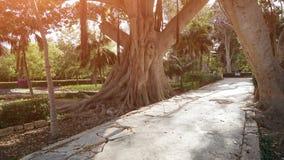 Ficus antique dans un jardin botanique de Malte Photographie stock libre de droits