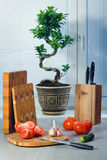 Ficus a bonsai near a window about blinds, tomatoes, garlic, a cucumber, knives and a chopping boards. On a table Stock Photography