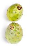 Ficus d'opuntia indica photographie stock