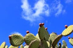 Ficus d'opuntia indica avec des fruits de figue de Barbarie contre le ciel bleu photographie stock libre de droits
