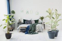 Ficus dans l'intérieur lumineux de chambre à coucher Photo libre de droits