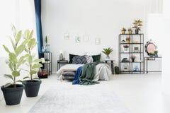 Ficus dans l'intérieur spacieux de chambre à coucher Images stock