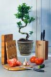 Ficus ein Bonsai nahe einem Fenster über Vorhänge, Tomaten, Knoblauch, eine Gurke, Messer und hackende Bretter Stockfotografie