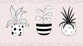 Ficus et dracaena de Spathiphyllum dans des pots de fleurs illustration libre de droits
