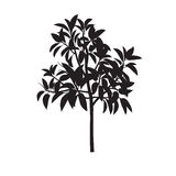 Ficus fig silhouette Royalty Free Stock Image