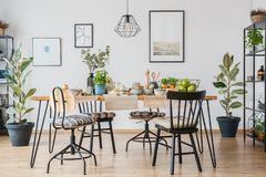 Free Ficus In Cozy Dining Room Royalty Free Stock Photo - 111112735