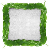 Ficus leaf frame Royalty Free Stock Photography