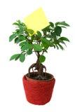 Ficus no potenciômetro com um papel vazio Fotografia de Stock