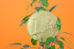 Ficus and one euro coin Stock Photo
