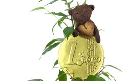 Ficus ,one euro coin and Teddy Bear Royalty Free Stock Photography