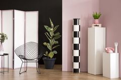 Ficus in pink studio interior stock photography