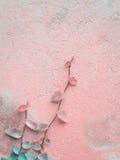 Ficus Pumila winogrady wspina się na cement ścianie Zdjęcia Royalty Free