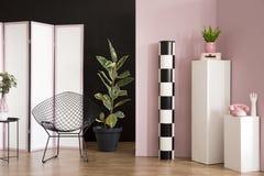 Ficus in roze studiobinnenland stock fotografie