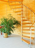 Ficus and spiral staircase. Royalty Free Stock Images