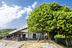 Ficus superba tree Stock Photos
