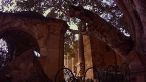 Ficus Sycomorus 1299 και αρχαία κτήρια στο κέντρο Famagusta φιλμ μικρού μήκους