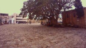 Ficus Sycomorus 1299 στο τετράγωνο μπροστά από τον καθεδρικό ναό του Άγιου Βασίλη μουσουλμανικών τεμενών πασάδων Lala Mustafa απόθεμα βίντεο