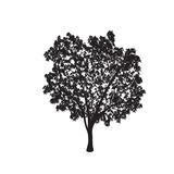 Ficus tree silhouette with leaves Royalty Free Stock Image