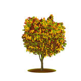 Ficus tree with yellow leaves Stock Image