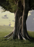 Ficus Trees III. A ficus tree, also known as the Weeping Fig tree. Native to India stock photos