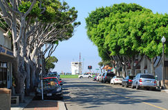 Ficus trees line Ocean Avenue in Laguna Beach, California. Royalty Free Stock Image