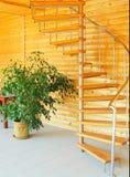 Ficus y escalera espiral. Imágenes de archivo libres de regalías
