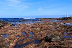 Fidalgo de Punta Fotos de Stock Royalty Free