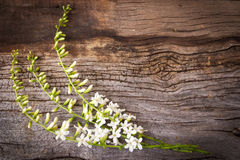 Fiddle Wood-Blume auf hölzernem Hintergrund Stockfotos