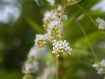 Fiddle Wood Flowers Hanging royalty-vrije stock foto