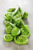 Fiddleheads Photographie stock