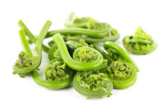 Fiddleheads Royalty Free Stock Photos