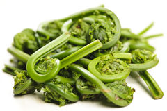Fiddleheads Fotos de Stock
