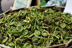Fiddleheads voor Verkoop bij de Markt van de Landbouwer Stock Foto