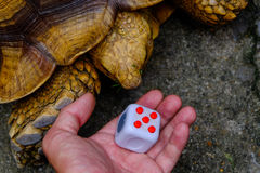 Fidget Cube. Songkhla, Thailand - May 27, 2017: Fidget Cube stress reliever manipulated ( turtle looking fidget cube Stock Images