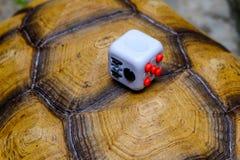 Fidget Cube. Songkhla, Thailand - May 27, 2017: Fidget Cube on tortoise, Fingers Toy Stock Photography