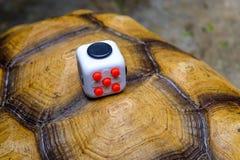 Fidget Cube. Songkhla, Thailand - May 27, 2017: Fidget Cube on tortoise, Fingers Toy Royalty Free Stock Image