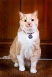 Fido, el gato del protector Foto de archivo