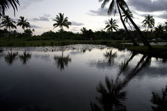 Fidschi-Sonnenuntergang Lizenzfreies Stockfoto