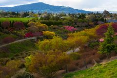 Fiducia dell'albero del Distretto di Rotorua fotografie stock libere da diritti