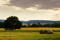 Fiel with hay bales and tree in a warm summer evening light. Simple composition, very warm light royalty free stock images