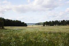 field вал стоковая фотография rf