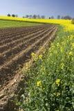 field весна Стоковое Фото