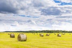 Field вполне шариков сена на ярком летнем дне Стоковая Фотография RF