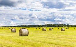 Field вполне шариков сена на ярком летнем дне Стоковое фото RF