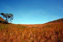 field выгон Стоковая Фотография RF