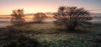 Field в восходе солнца в городке Blaricum в Нидерландах Стоковые Изображения