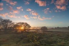 Field в восходе солнца в городке Blaricum Стоковая Фотография RF